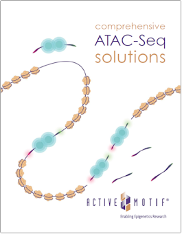 Active Motif ATAC-Seq