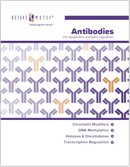 Active Motif Antibodies Catalog