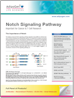 Notch_Signaling AdipoGen